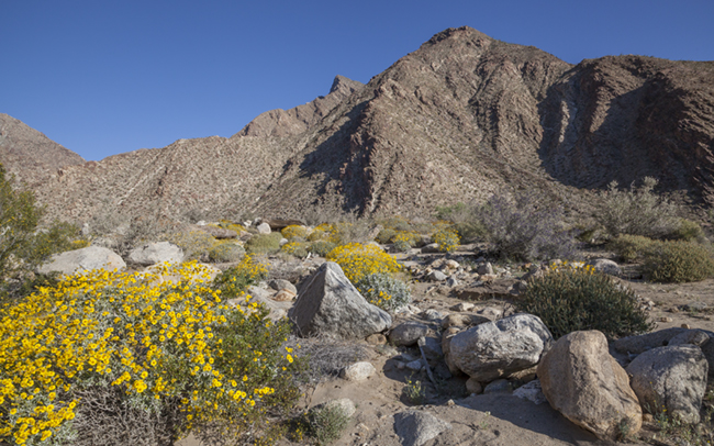 Palm_Canyon_Trail_Thumbnail.jpg